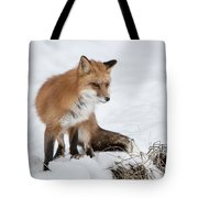 The Sly One Tote Bag