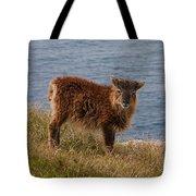 The Soay Sheep  Tote Bag