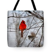 Blue Eyes In The Snow Cardinal  Tote Bag