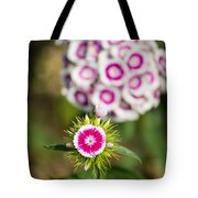 The Star - Beautiful Spring Dianthus Flowers In Bloom. Tote Bag