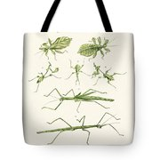 The Stick Insect Tote Bag