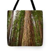 The Survivor - Massive Redwoods Sequoia Sempervirens In Redwoods National Park Named Stout Tree. Tote Bag