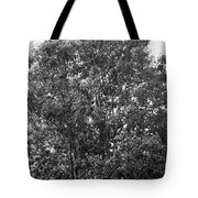 The Survivor Tree In Black And White Tote Bag