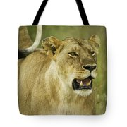 The Tail Rules Tote Bag