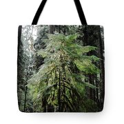 The Tree In The Forest Tote Bag