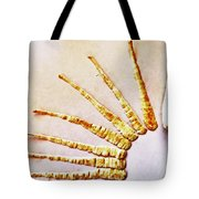 The Undressed Parsnip Tote Bag