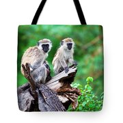 The Vervet Monkey. Lake Manyara. Tanzania. Africa Tote Bag