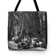The Wawona Giant Sequoia Tree Tote Bag