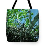 The Young Eaglet Peaks Out  Tote Bag
