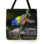 Thirsty Painted Bunting Tote Bag