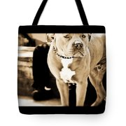 This Dog Has A Soul Tote Bag