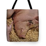 This Little Piggy Tote Bag by Luke Moore