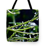 This Morning Tote Bag