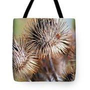 Thistle Seedheads Tote Bag
