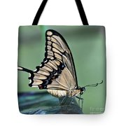 Thoas Swallowtail Butterfly Tote Bag