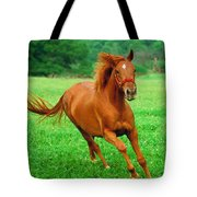 Thoroughbred Filly Tote Bag