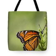 Those Magnificent Monarchs - Danaus Plexippus Tote Bag