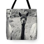 Three Alpaca Friends Tote Bag