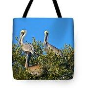 Three Brown Pelicans Tote Bag