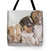 Three Collie Puppies Tote Bag