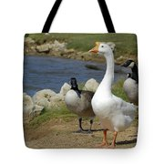 Three Geese Just Srolling Along Tote Bag