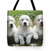 Three Golden Retriever Puppies Tote Bag