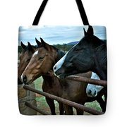 Three Horses Waiting For Carrots Tote Bag