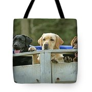 Three Kinds Of Labradors Tote Bag