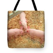 Three Little Pigs Tote Bag