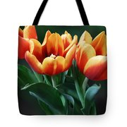 Three Orange And Red Tulips Tote Bag