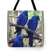 Three Pals Tote Bag