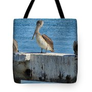 Three Pelicans Tote Bag