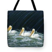 Three Pelicans Hanging Out  Tote Bag