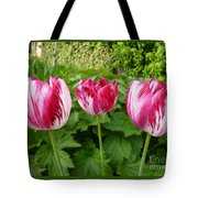 Three Pink Rembrandt Tulips Tote Bag
