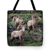 Three Rams Tote Bag