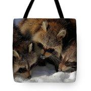 Three Sweet Raccoons Tote Bag