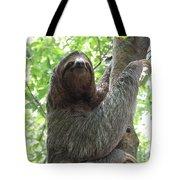 Three Toed Sloth  Tote Bag
