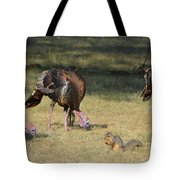 Three Toms And A Squirrel Tote Bag