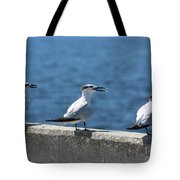 Three Turning Terns Tote Bag