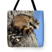 Three Young Raccoons Tote Bag