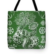 Thuroidea From Kunstformen Der Natur Tote Bag