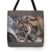 Sumatran Tiger-5418 Tote Bag