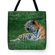 Tiger At Rest 1 Tote Bag