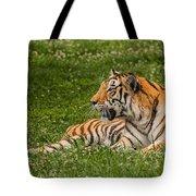 Tiger At Rest 3 Tote Bag
