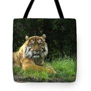 Tiger At Rest Tote Bag