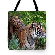 Tiger In The Vast Jungles Tote Bag
