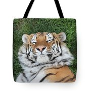 Tiger Nap Time Tote Bag