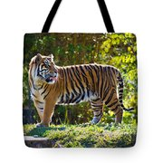 Tiger On The Prowl Tote Bag