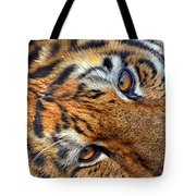 Tiger Peepers Tote Bag