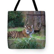 Tiger Resting Tote Bag